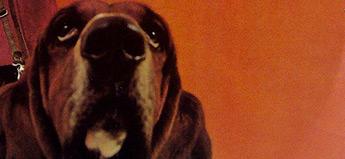 Giorgio Moroder「Tears」